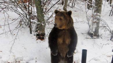мечки парк Белица