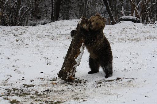 мечки